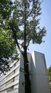 obžagovanje drevja